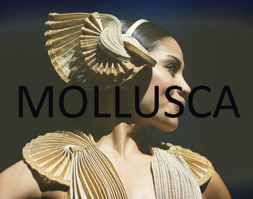 MOLLUSCA copy