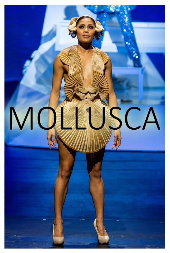 Mollusca 1